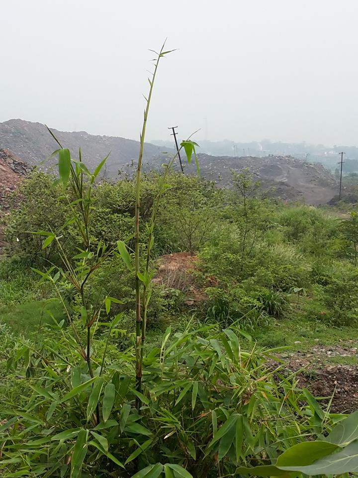 Eco-Restoration ROCP (BCCL) _ PIC017
